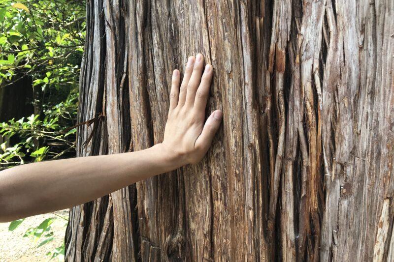 木に触れる男性